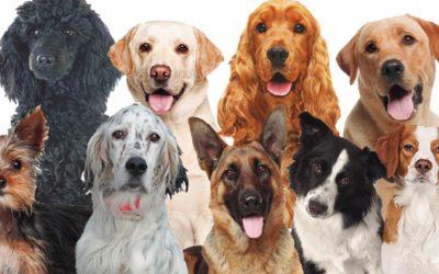 Qué es un seguro de perros