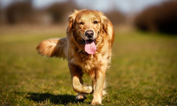 Los tipos de seguros de perro que puedes contratar