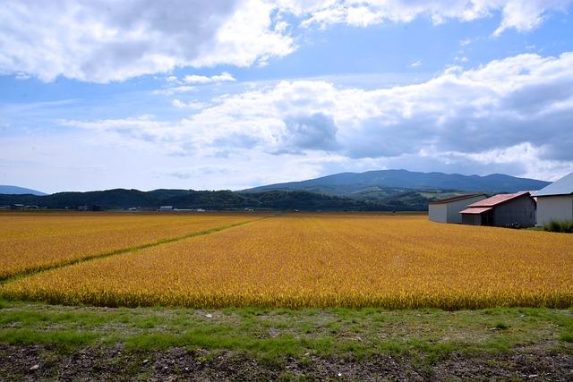 plan agrícola